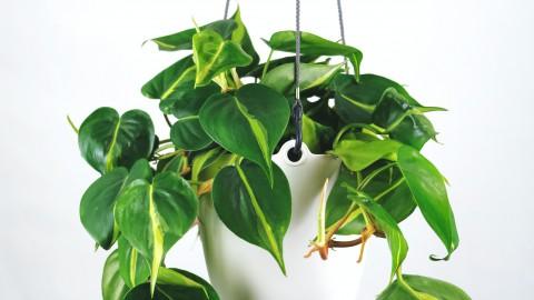 Waarom zijn planten goed voor je gezondheid