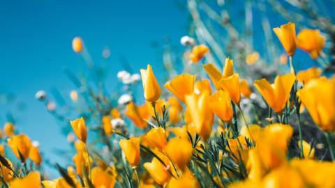 Het is herfst en de bloembollen kunnen geplant worden