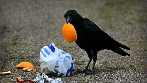Plastic Bag Free, een goed initiatief