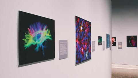 Vernieuwde presentatie van het Schildersmuseum